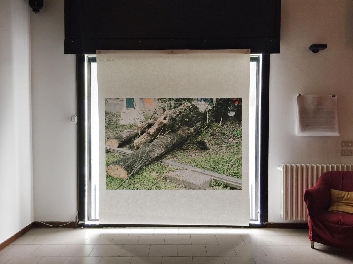 Le immagini degli alberi  di Milano, riprese  dal basso